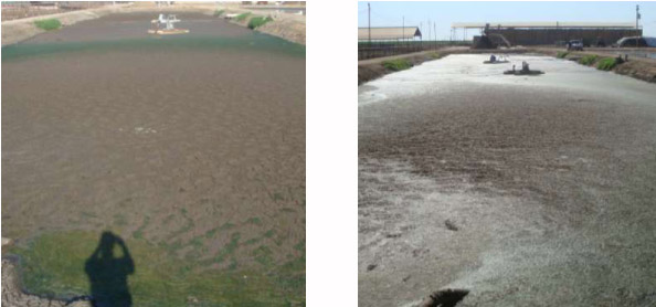 Left: Pre Treatment on 7-24-10 || Right: 6 Days Post Treatment 7-30-10 .38 acre lagoon treated with 17 Gallons Waste Away