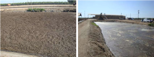 left: Pre Treatment on 7-24-10 || 6 Days Post Treatment 7-30-10 .38 acre lagoon treated with 17 Gallons Waste Away