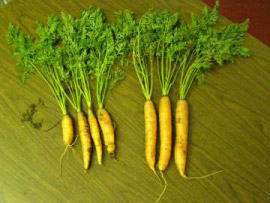 carrot_trials