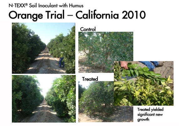 Orange Trial - California 2010 || Trial not final – harvest pending