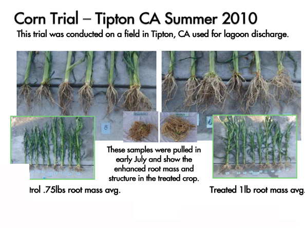 tipton_corn_trial